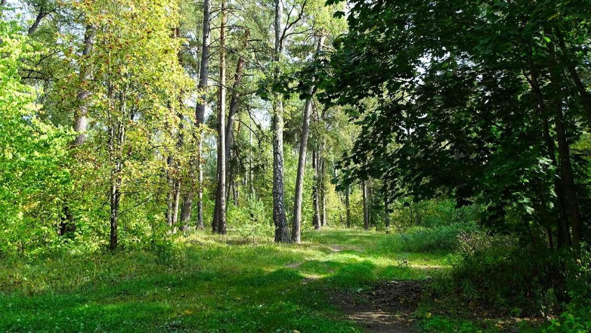 Сентябрь в пригородном лесу.
