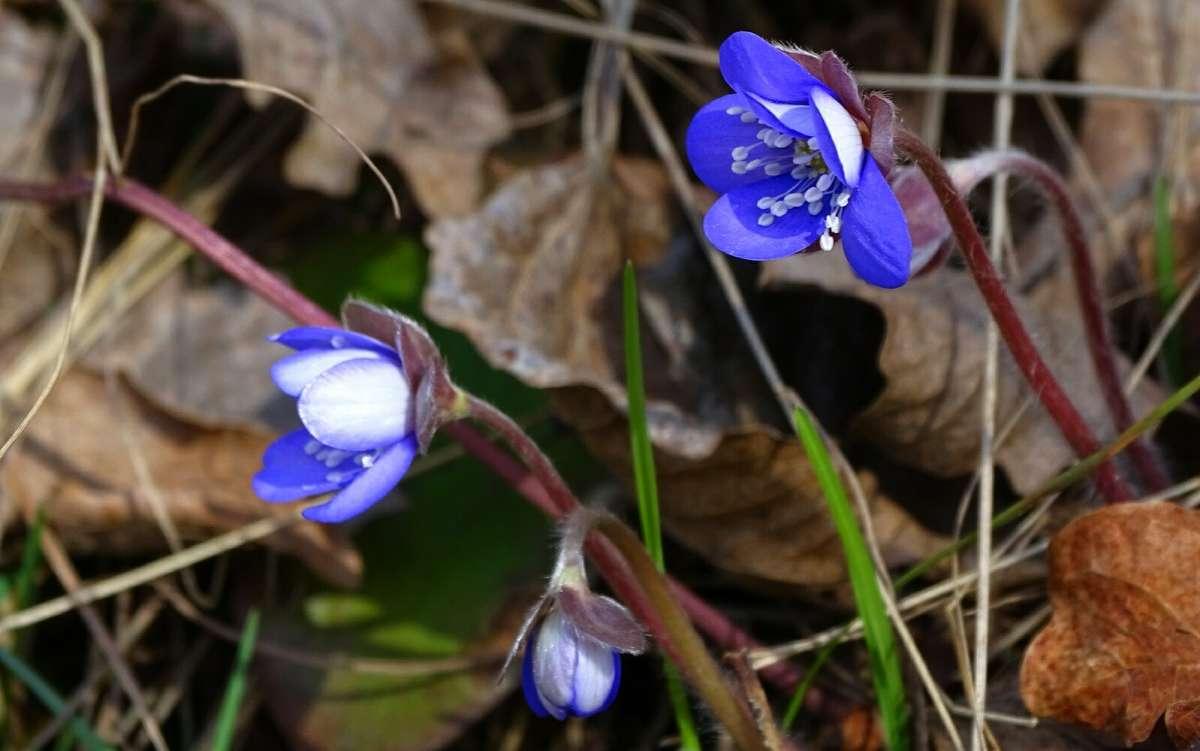 Весна и цветы