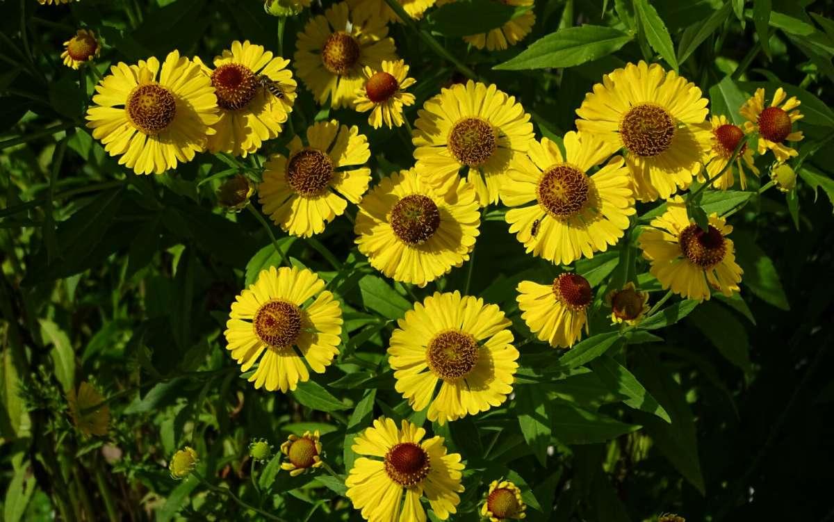 Цветы сентября