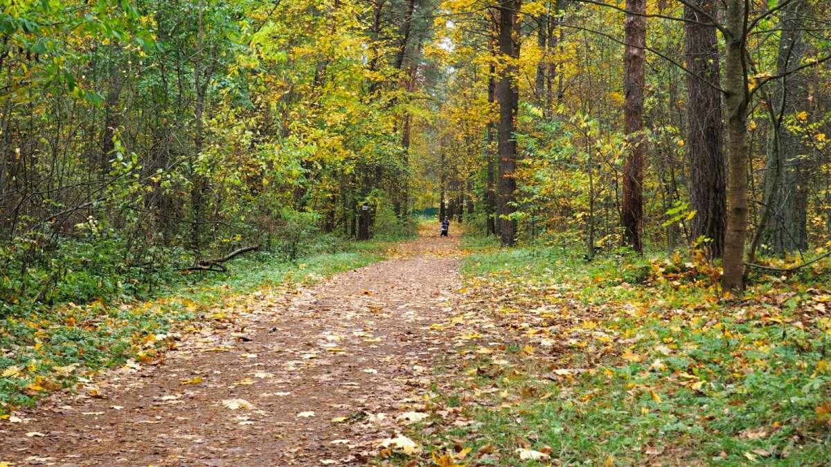 В пригородном лесу Смоленска.