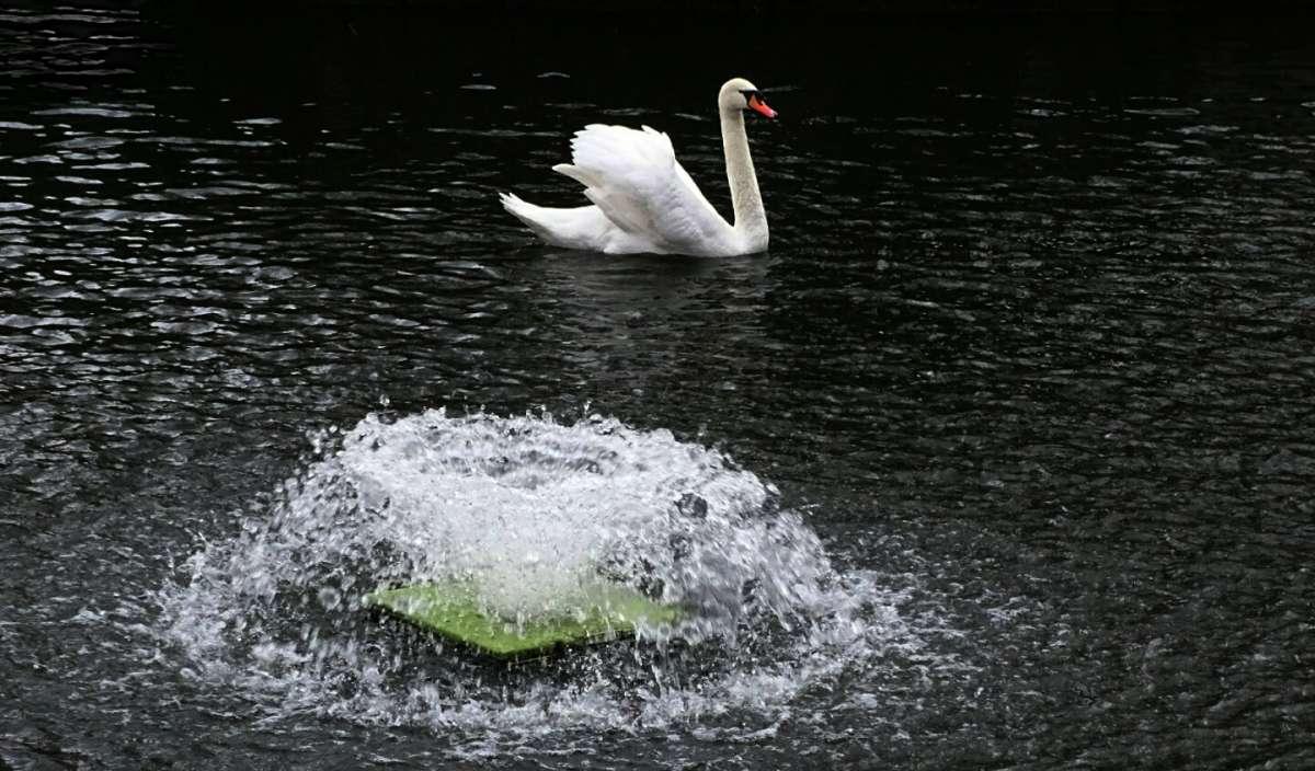 Лебедь на фоне фонтана.