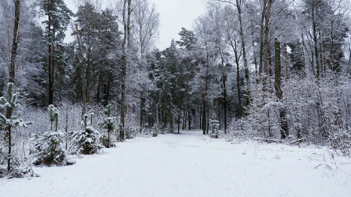 В пригородном лесу под Смоленском.
