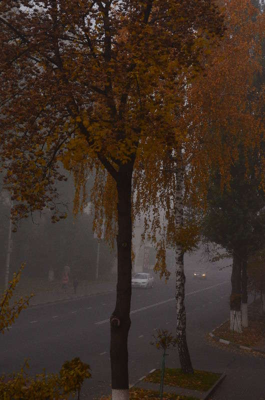 Утренний туман