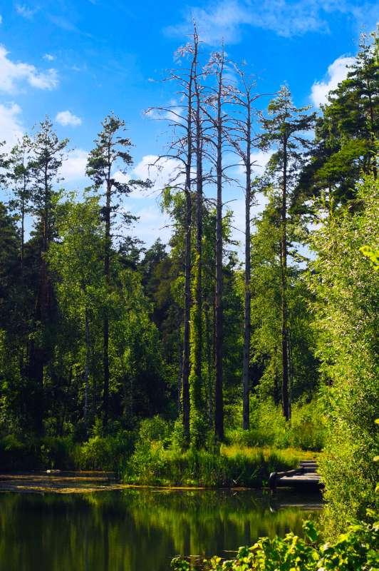 Лесной прудик