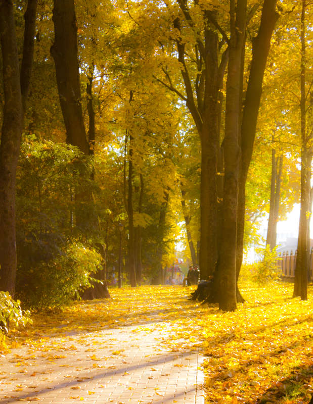 Осений парк в золотом закате