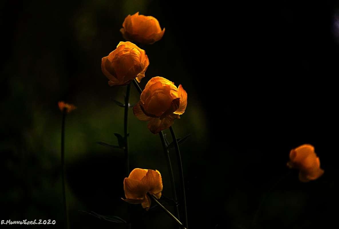 Цветы вечером