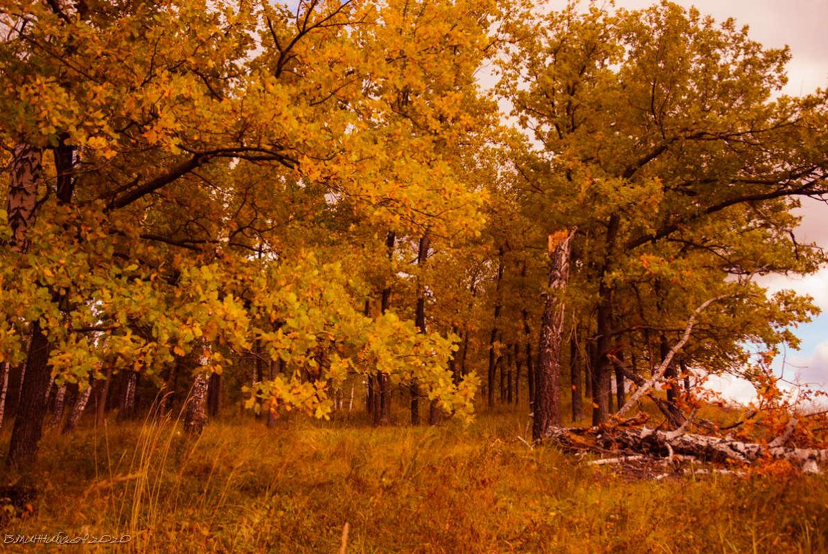 Осень на опушке