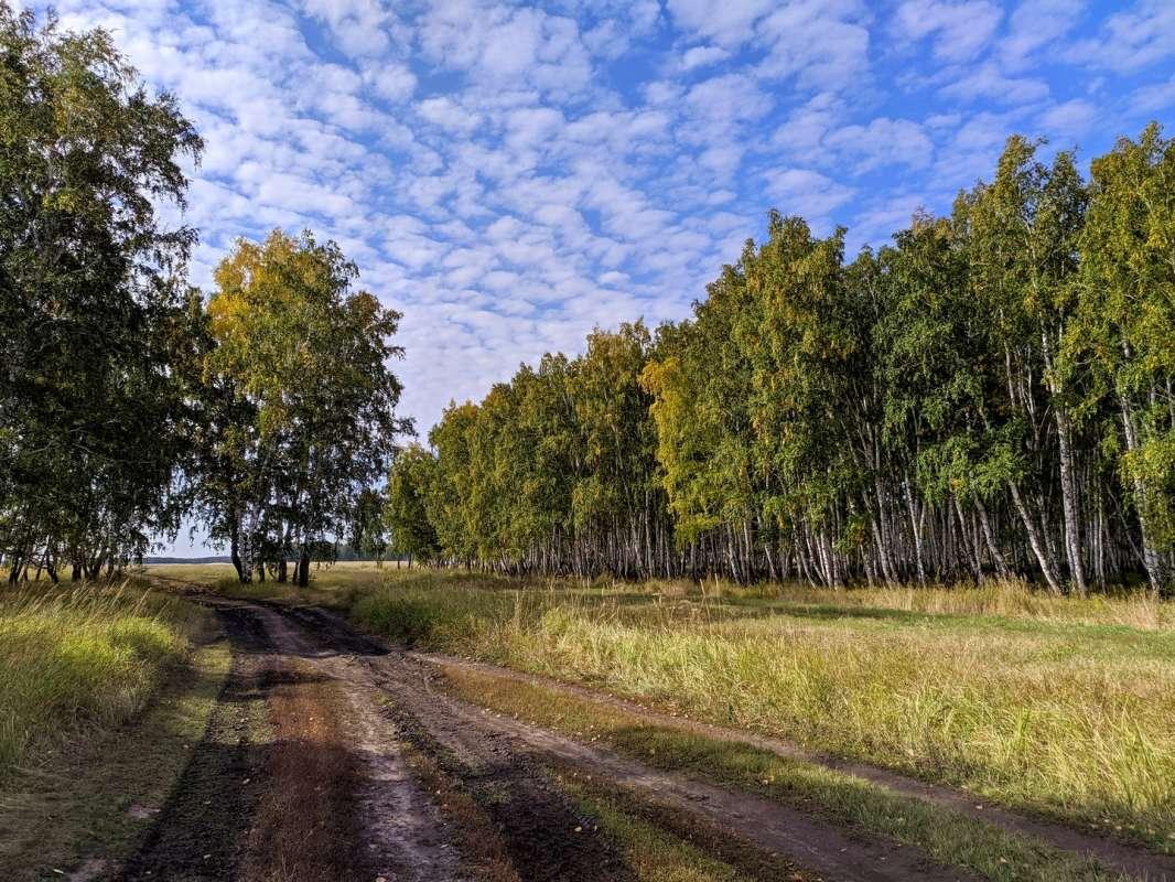 Калачинские леса
