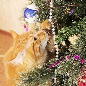 Кошка украшает елку
