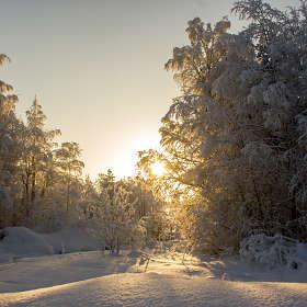 Любимая зима