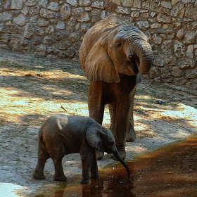 Про маленького слоненка