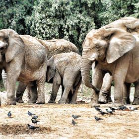 Про слонов