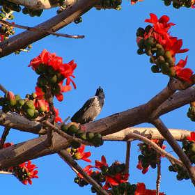 Про ворону и красные цветы