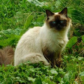 Кошечка на траве