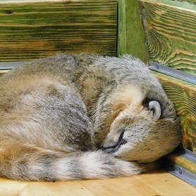 Спящая Носуха