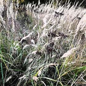 Осенние травы...