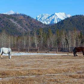 Две лошадки в загоне