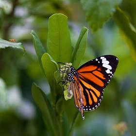 Бабочки в парках Гонконга