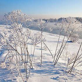 Белые цветы зимы