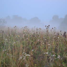 Утренний туман над Клязьмой..