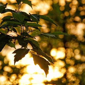Зелень золотая