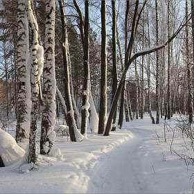 Зимний  лес-2.