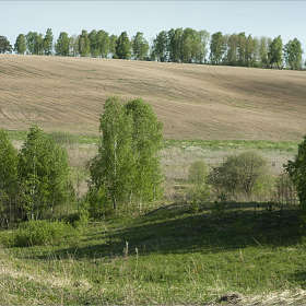 Косогоры, поля, перелески....