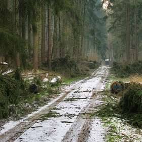 Когда валят лес
