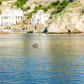 Дельфин и набережная Назукина, Балаклава