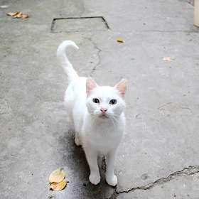 Крымская Кошка