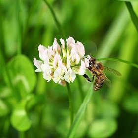 Из жизни насекомых - 2