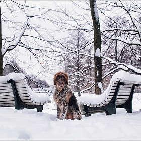 """""""Зима однако..."""""""