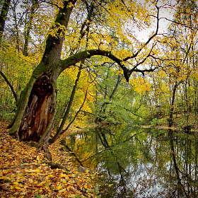 В заповедных и дремучих, страшных Муромских лесах...