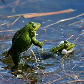 Танцы на воде..