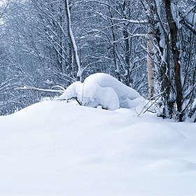 Снежный бык