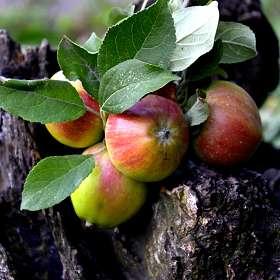 плоды природы