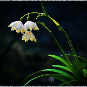 Весной пахнет))))