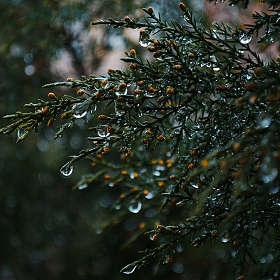 И снова про дождь))))