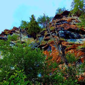 Скалы, ветви, мхи
