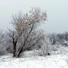 И снег, и листья, и туман .... )