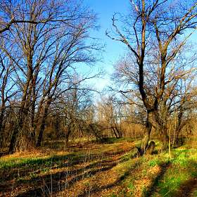 Весенние лесные светотени  )))