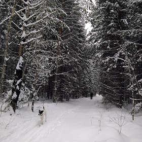 Уступите лыжню