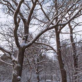 Зимние сумерки 3