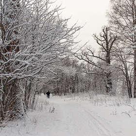 Зимние сумерки 7