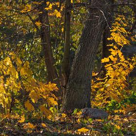 Осенний этюд 3
