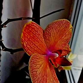 Ал  цветочек!))...