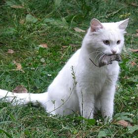 Василиса-охотница