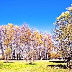 Полотна художницы Осени