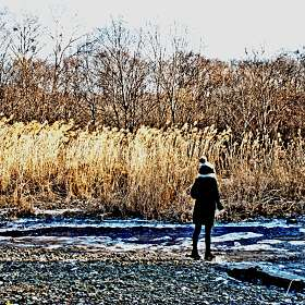 Камыш и быстрый ключ Озерный