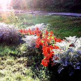 Цветник на зеленом газоне